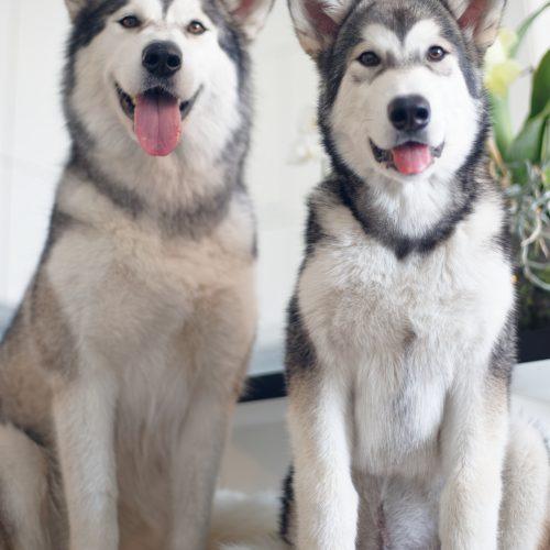 Taiga & Yuki