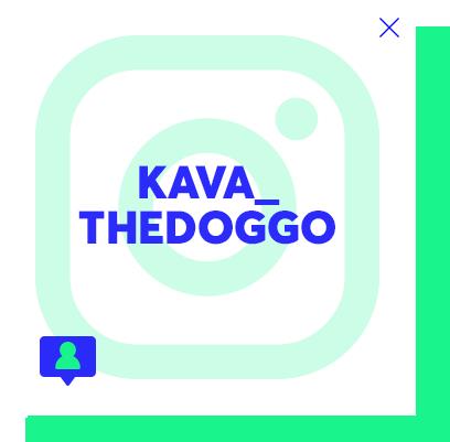 kava_thedoggo